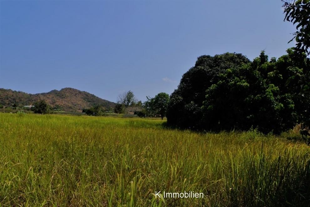 Sicht Richtung Süden mit grossem Mangobaum.